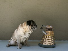 Mops schaut auf Dalek-Figur